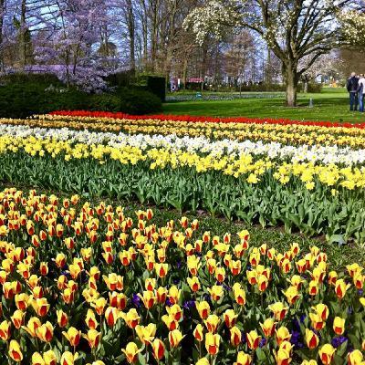 World Festivals, Foods, Gardens Of Spring