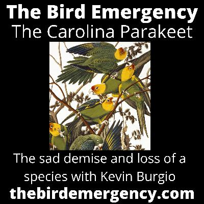 047 The Extinction of the Carolina Parakeet with Kevin Burgio