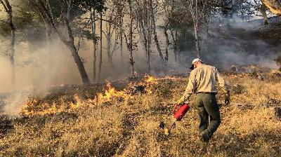 As A Destructive Fire Season Rages On, What Might Prevent The Next One?
