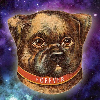Forever Dog Podcast