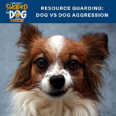 Resource Guarding: Dog vs Dog Aggression