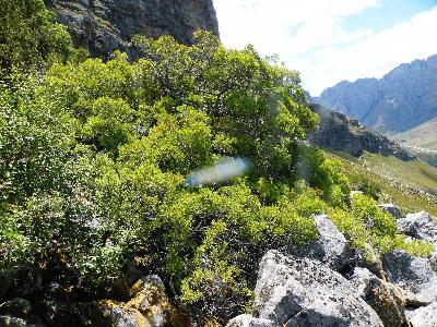 3906: Klein Karoo nature reserve