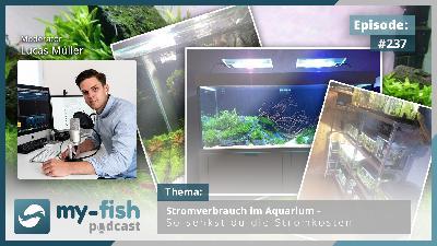 237: Stromverbrauch im Aquarium – So senkst du die Stromkosten