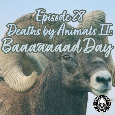 Episode 28- Deaths by Animals II: Baaaaaaaaad Day