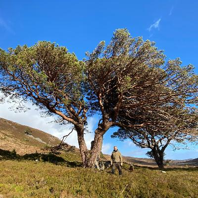 How to bring back a forest, and a Scotland of the past, one tree at a time