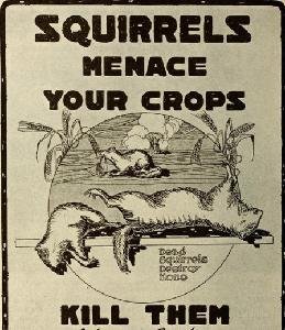 386 - The War on Squirrels