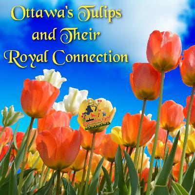 Ottawa's Tulips and Their Royal Connection