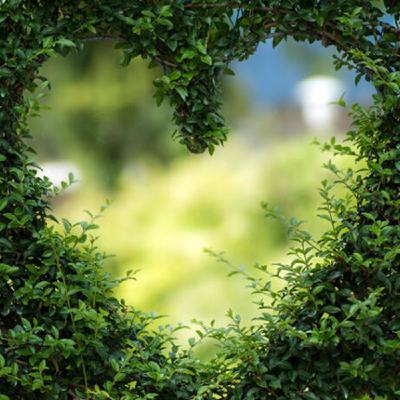 105 - Por qué debes hacerle caso a la sabiduría de tu corazón