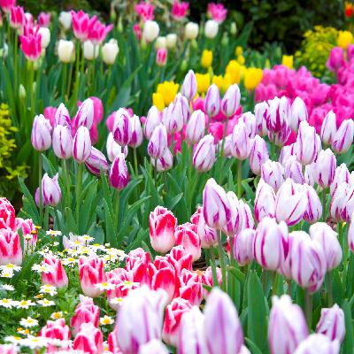 Fall Bulbs for Spring Blooms, and Bareroots