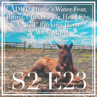 23 || ADHD, Horse's Water Fear, Biting, Clicker Fear, Head Shy, A Bad Bucking Horse & Much More!