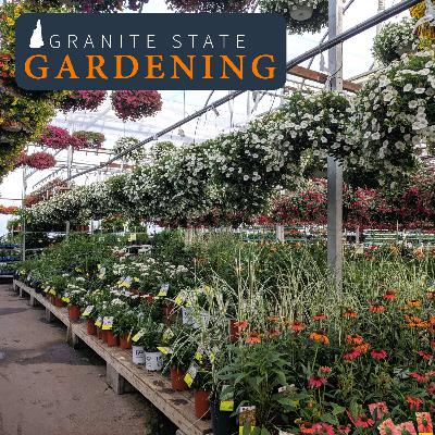 The Time to Plant: Garden Center Shopping Tips for Memorial Day Weekend