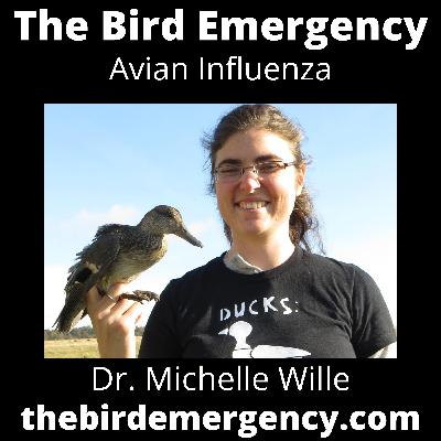 048 How Likely Is A Bird Flu Pandemic? with Michelle Wille