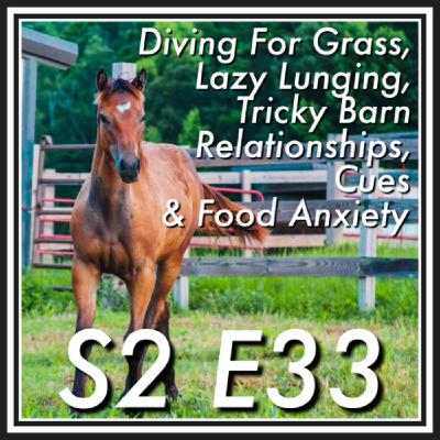 33 || Diving For Grass, Lazy Lunging, Complicated Barn Relationships, Cues & Food Anxiety