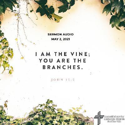 John 15 Sermon - Care and Pruning