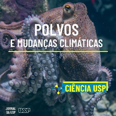 Destaque do Ciência USP #13: Como polvos são afetados pelas mudanças climáticas?