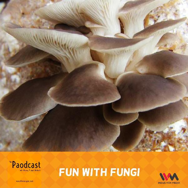 Ep. 95: Fun With Fungi