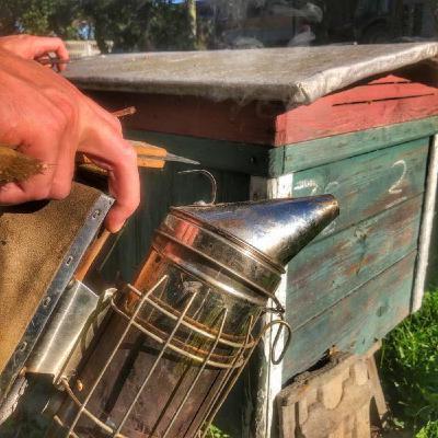 Pszczelarstwo w mieście - czy to ma sens?