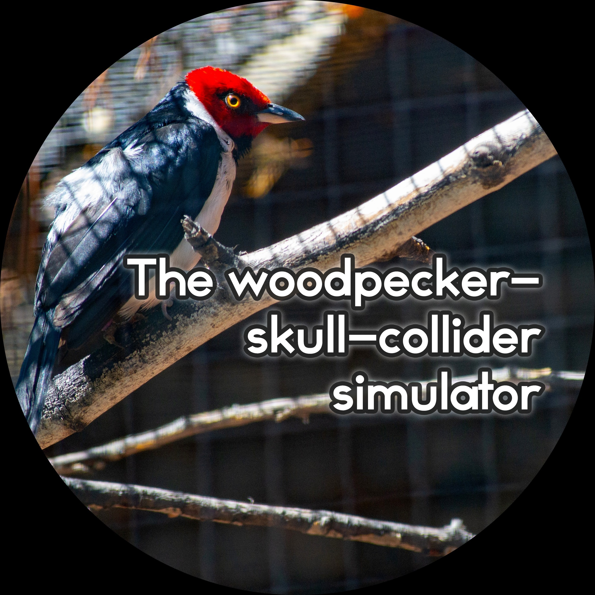 Spækbrættet: The woodpecker-skull-collider simulator