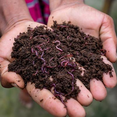 Waste Solutions: Vermicomposting
