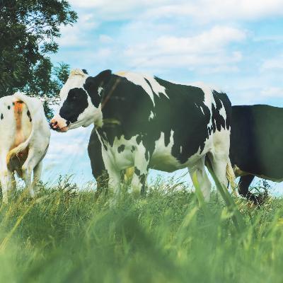 Episode 376: Dear Sonny Perdue, Small Farms Matter