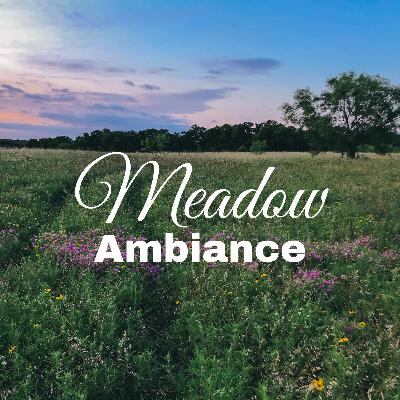 Meadow Ambiance for Focus and Relaxation