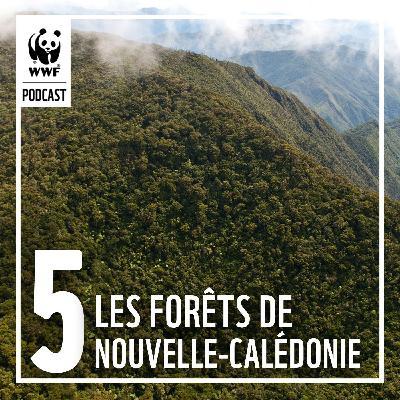 Protéger les forêts emblématiques de Nouvelle-Calédonie