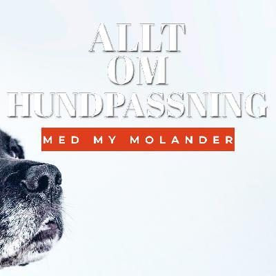 Allt om hundpassning - Med My Molander