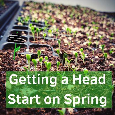 Getting a Head Start on Leafy Greens