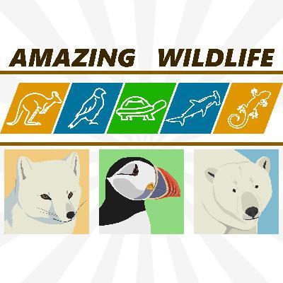 Arctic Fox | Puffins | Polar Bear
