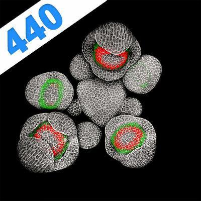 440 - L'art des méristèmes : le développement des fleurs par Nathanaël Prunet