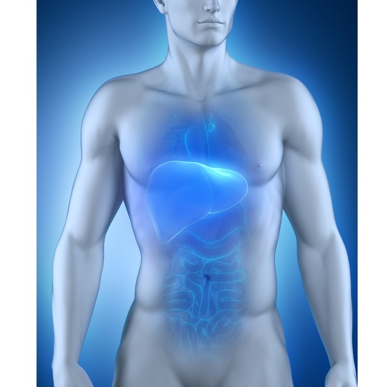Detoxication Hépatique au Coeur de la Santé Globale