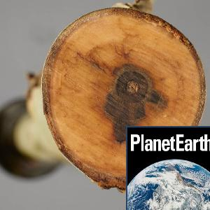 Using Genetics to Save the Ash Tree - Planet Earth Podcast - 13.02.05