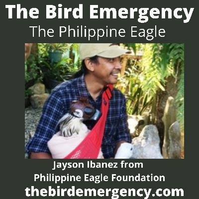 044 The Philippine Eagle with Jayson Ibanez
