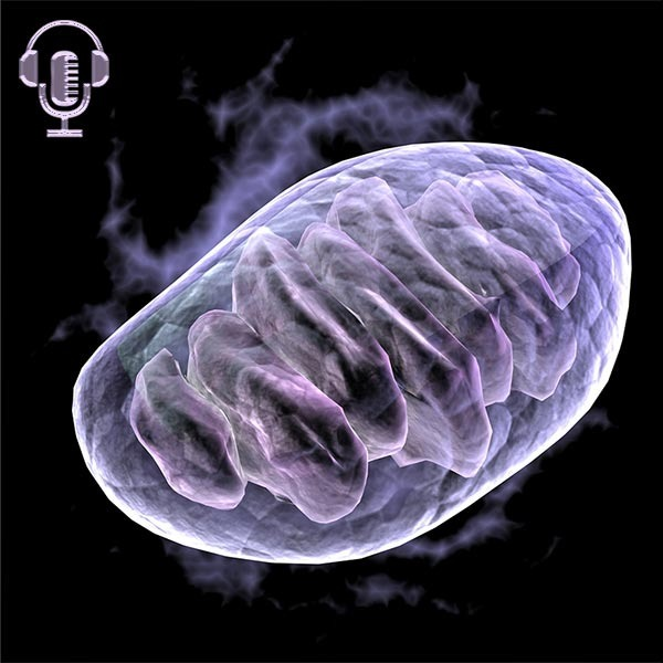 33 new things we've learned about Mitochondria