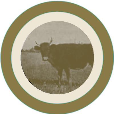 Episode 155: Lost Bulls