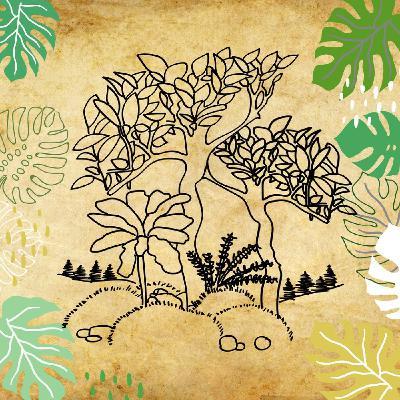 Les forêts, préserver ou replanter ?