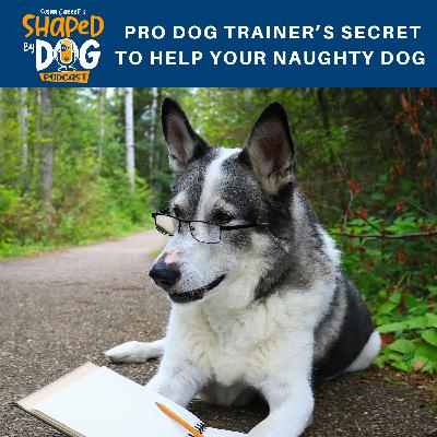 Pro Dog Trainer's Secret to Help Your Naughty Dog
