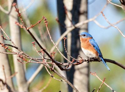 Episode 15: The Bluebird