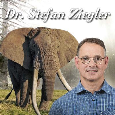 Elfenbein im Keller? - Dr. Stefan Ziegler