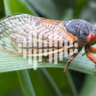 Cicada citizen science, and expanding the genetic code