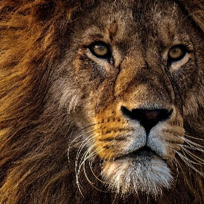 Artificial Intelligence in Digital Marketing: Lion King of the Jungle Promotes the Legend