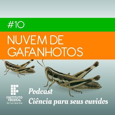 #10 | Ciência para seus ouvidos: Meu Deus, agora tem nuvem de gafanhotos