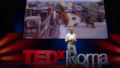 How animals and plants are evolving in cities | Menno Schilthuizen
