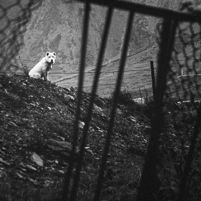 Escuchamos hablar a los perros (y otras historias paranormales)