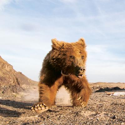 Tracking Grizzlies in the Gobi Desert with National Geographic Wildlife Biologist Doug Chadwick