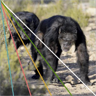 Chimpanzees as pets and wild animal souls. Life at AAP Primadomus in Spain.