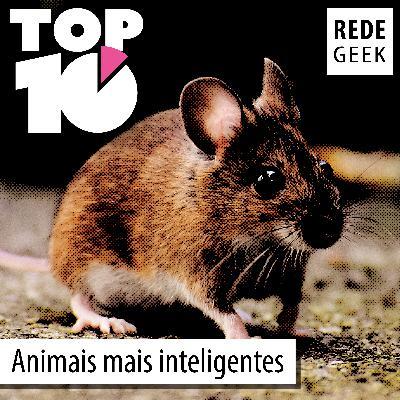 TOP 10 – Animais mais inteligentes