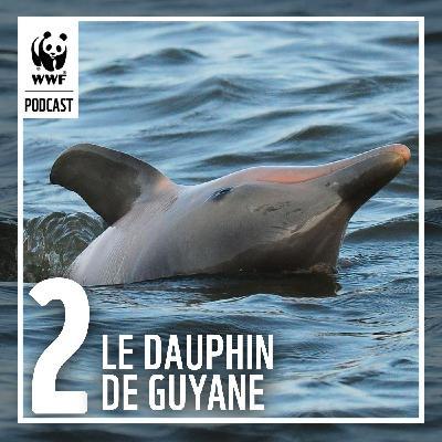 Étudier le dauphin de Guyane pour mieux le protéger