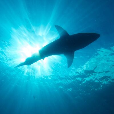Cosmic Queries – Sharks