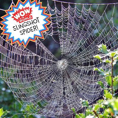 Slingshot Spider (Encore - 9/6/21)
